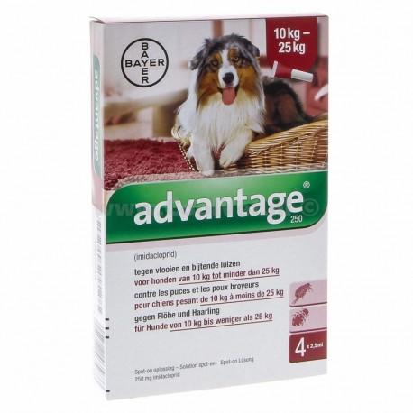 Advantage 250 pipetas para perros 10-25 kg.