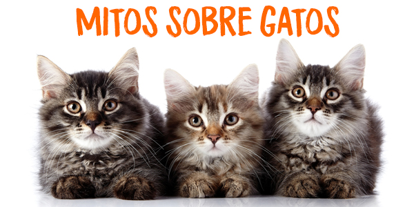 7-mitos-de-gatos