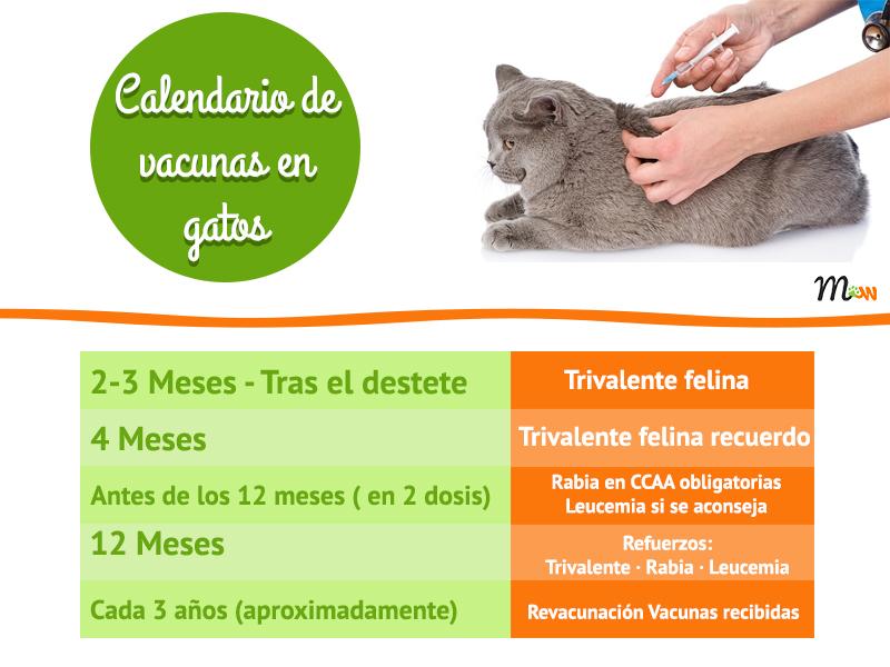 calendario de vacunas en gatos