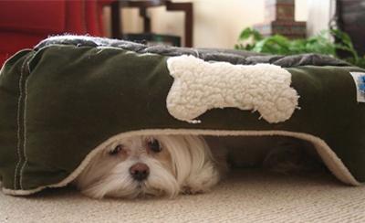 perros-miedo-petardos