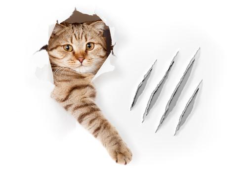 rascador ideal gato