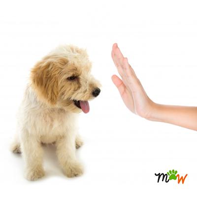 socialización-cachorro