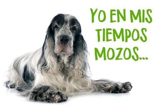 envejecimiento canino