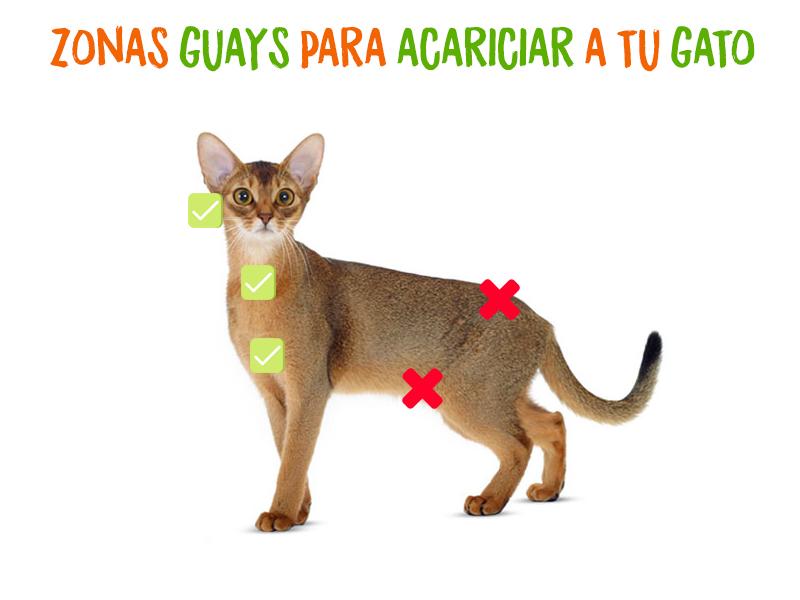 zonas-para-acariciar-gato