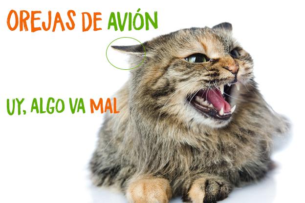 gato-muerde-cuando-le-acaricias