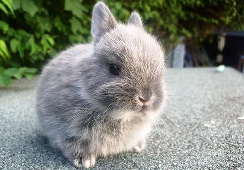 Alimentaci n del conejo enano qu debe comer - Casas para conejos enanos ...